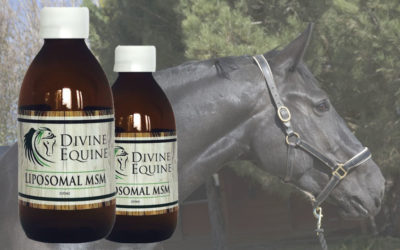MSM For Horses