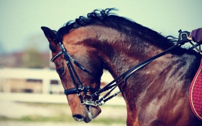 Can My Horse Read My Thoughts?