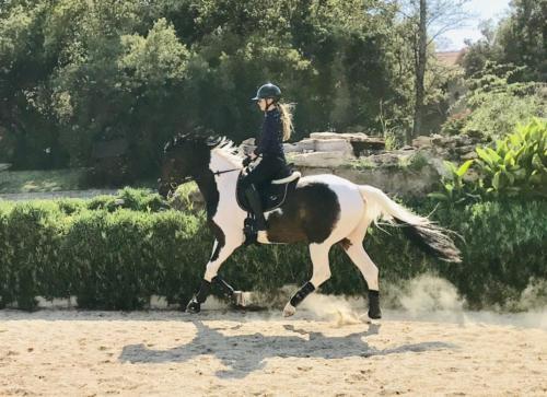 Divine Equine